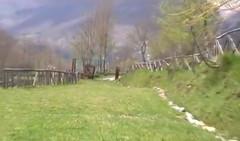 sanza video