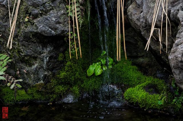 「金玉龍王の池」 水火天満宮 - 京都