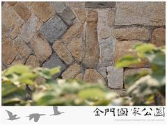 官澳鑲壁石獅-01