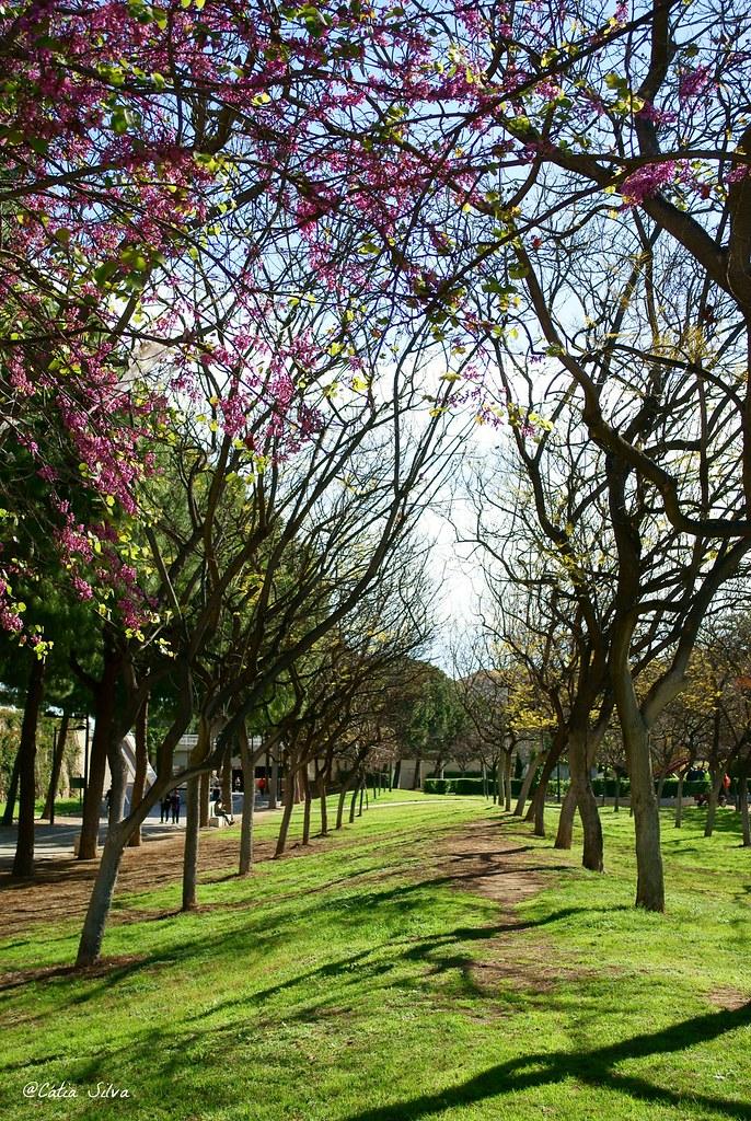 Valencia_Primavera_ Jardines del Turia (9)