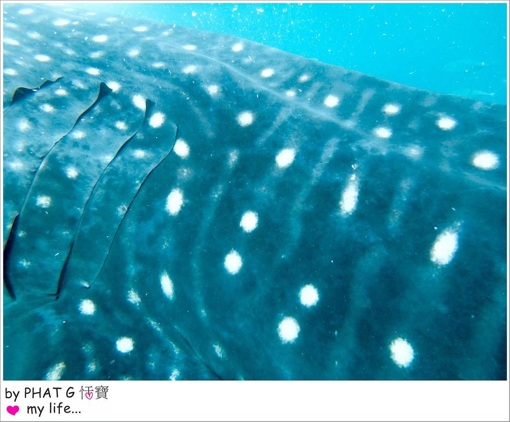 cebu whale shark 19-2