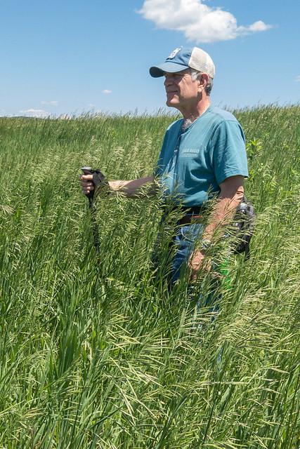 Thompson Prairie Prairie in June