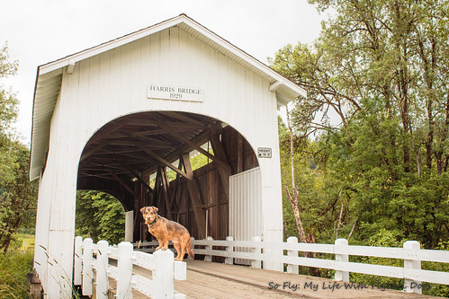 Harris Covered Bridge-4519