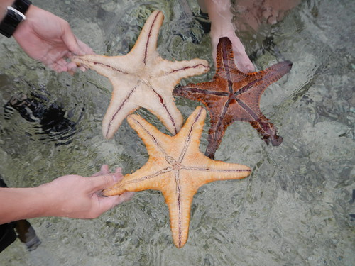 4 Aug 13 - Starfishes.