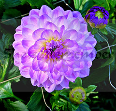 The world 39 s best photos of zaadplanten flickr hive mind for Betekenis uber