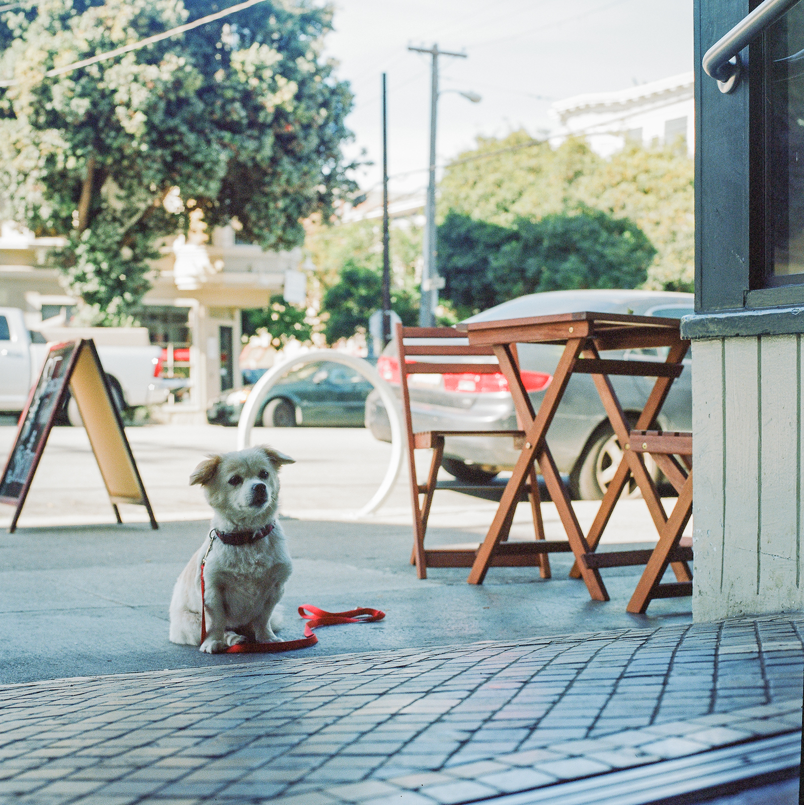 #lonelydogchronicles: Hasselblad Edition
