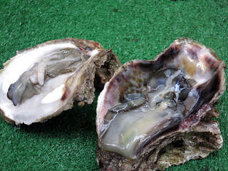 osa253oyster