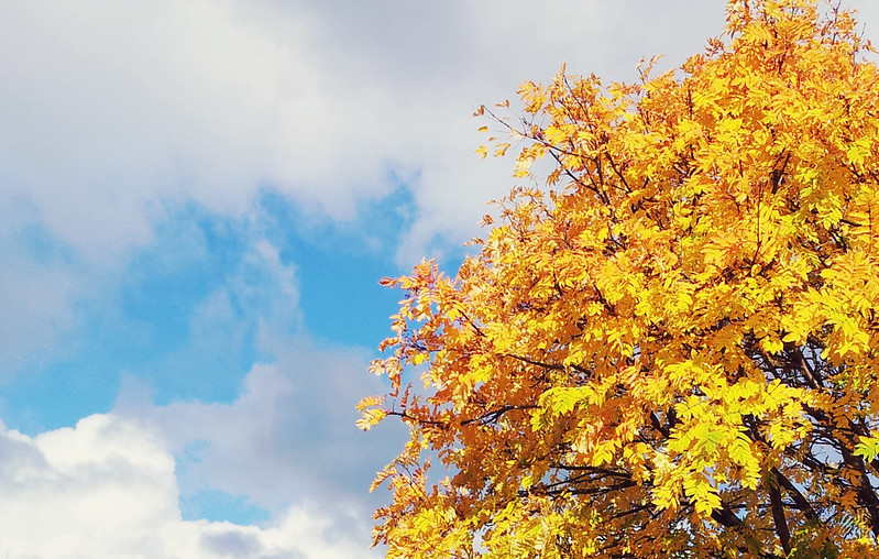 Autumn 2013 - yellow tree