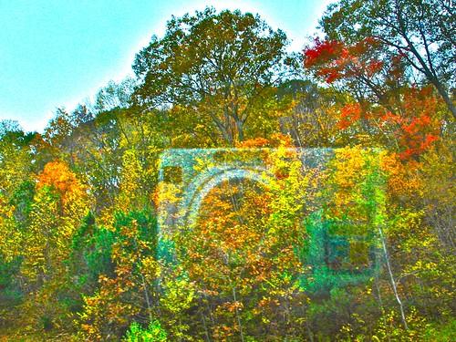 Camera in Fall by PHOTOFENNISH