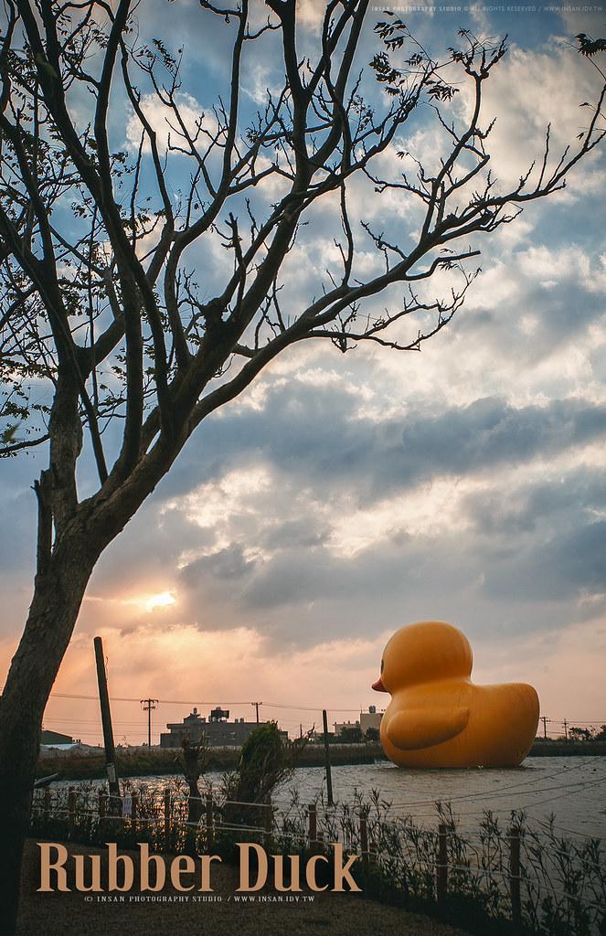 黃色小鴨 桃園 新屋