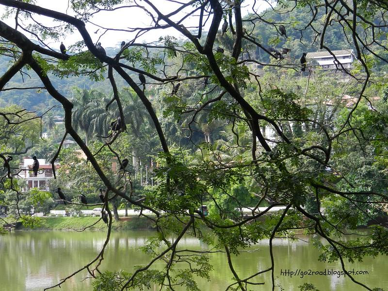Озеро в Канди - лучшее