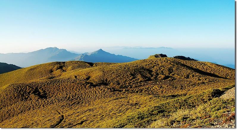 奇萊南峰箭竹坡 6