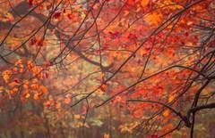 automne 13