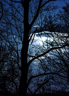Moonrise Cherokee Park Louisville by Kelly Davenport