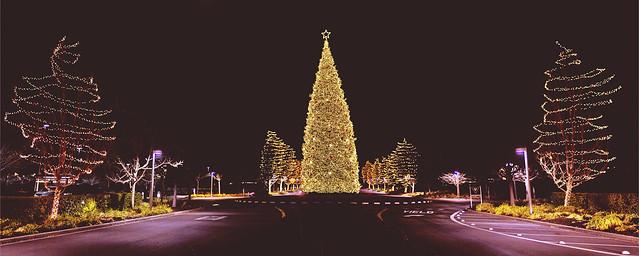 Christmas Tree 2013 #Flickr12Days