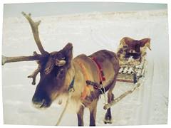Lapland-III