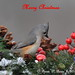 Merry Christmas by DBartesJr.