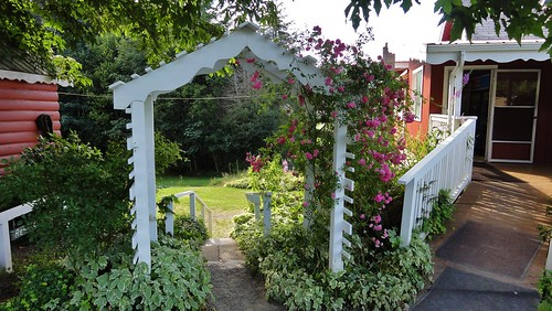 Arbor of roses at Patty's Place.