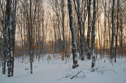 morning trees winter snow cold leaves forest sunrise landscape woods