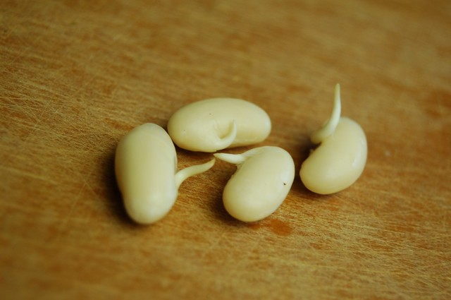 Sprouting Beans For Soups, Stir Frys, Wraps, Dips, and Salads
