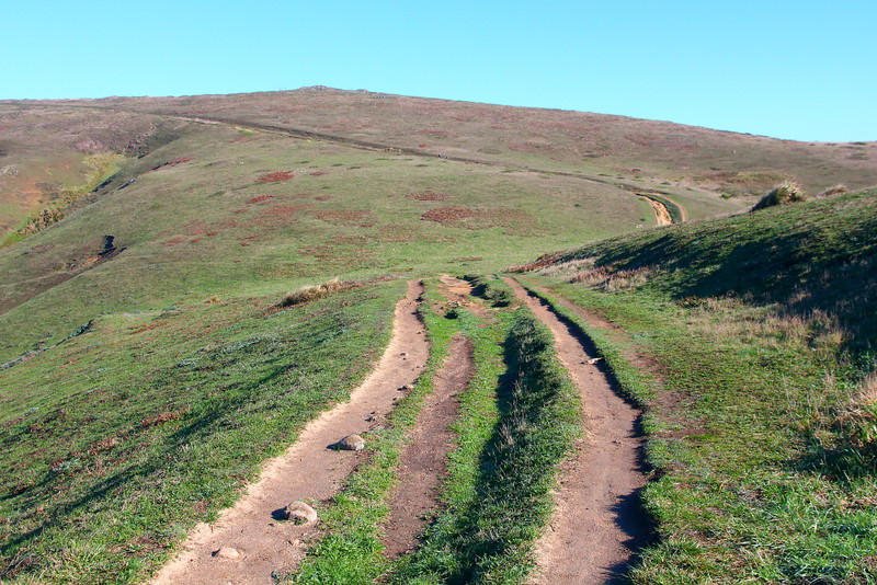 IMG_2725 Tomales Point Trail