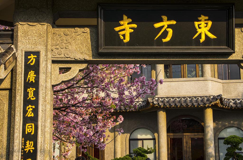 東方寺.櫻.