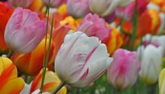 Vous voyez à quoi ça ressemble, le printemps ? ~ You see what spring looks like ?