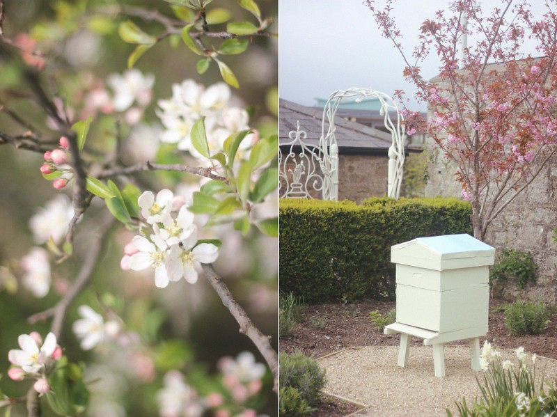 cherry blossoms + beehive airfield