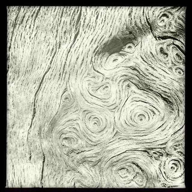Tree Gnarls