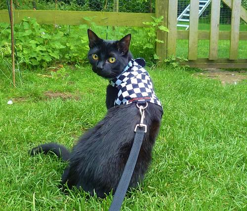 Mowgli in the garden