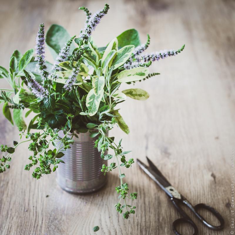 Fresh herbs | Fresh herbs from garden  Selective focus  | novolcar