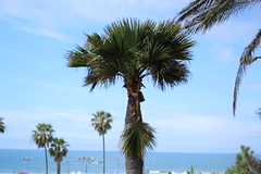 Palm Pt. 2
