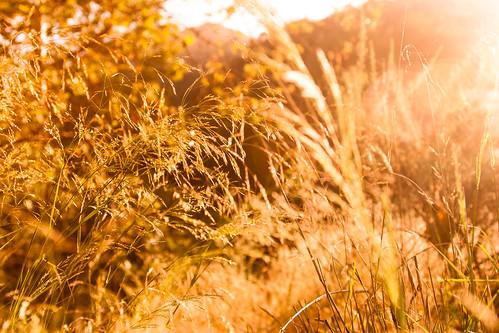 park light sun sunlight nature gold golden sierramadre baileycanyonpark