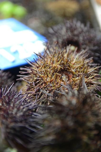 Urchin In Victoria Bc Restaurants