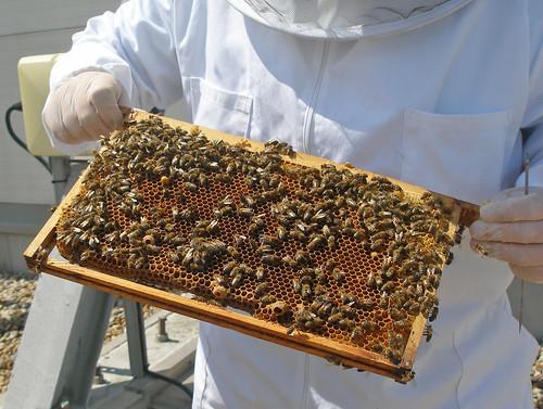 Princesshay bees 1