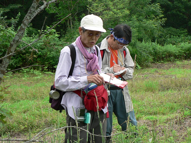 カモガヤやオオアワガエリなどの牧草を観察中.