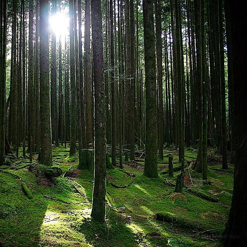 The Rainforest Coast of British Columbia