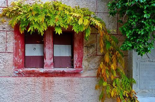 autumn window...