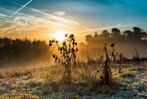 england sky mist sunrise dawn autum unitedkingdom sony wittenhamclumps littlewittenham earthtrust slta77 sonyziessdt1680