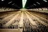 New Secrets of the Terracotta Warriors