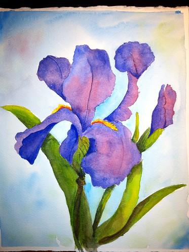 My first iris