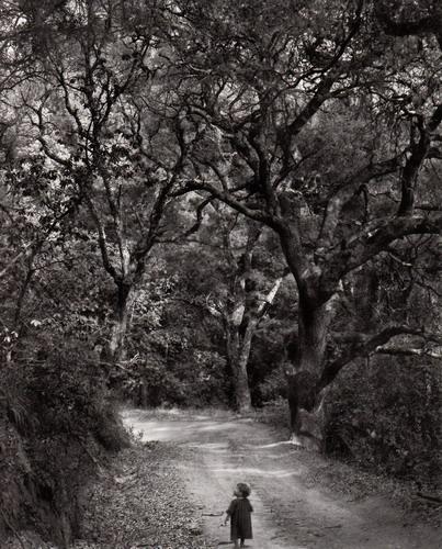 森の道を歩く子ども