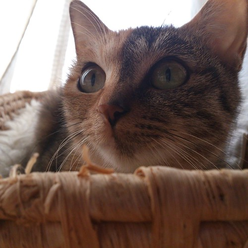 かごに移ってカトルが騒がしく遊んでいるところを眺めている by Chinobu