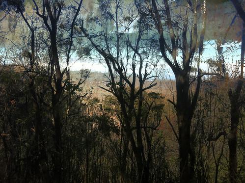 trees forrest northshore karenmcquilkin aforestinmaui
