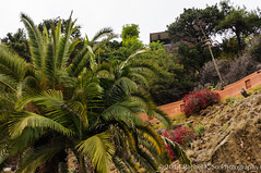 Landscaping, Private Driveway, Hollywood Hills