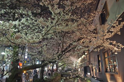 【写真】2014 桜 : 木屋町通/2021-09-17/IMGP5597