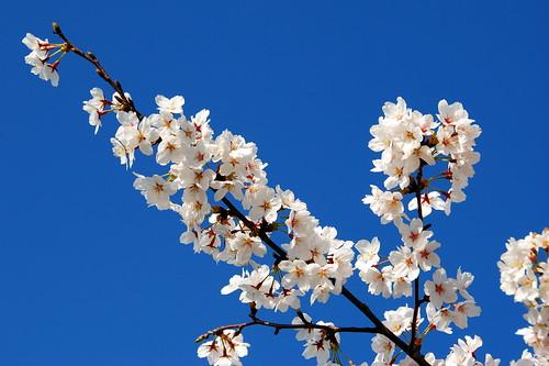 Inuyama Spring 2014 082r