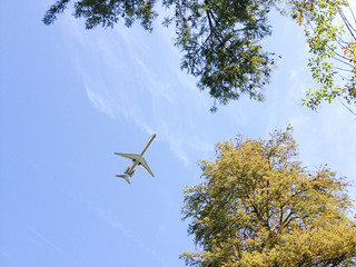 Airplane flying low over Theodore Roosevelt Memorial Island