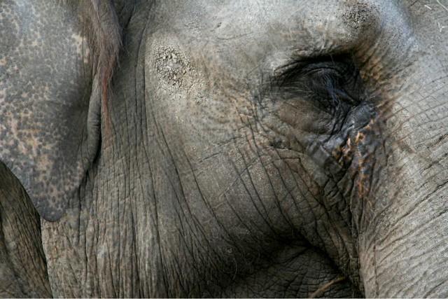1circus-elefante.jpg