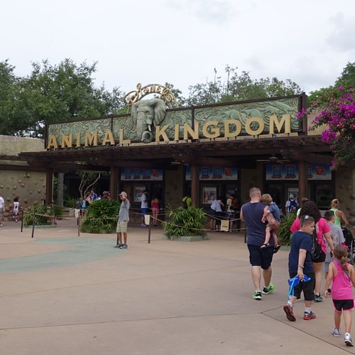 ディズニー・アニマルキングダムにきました。